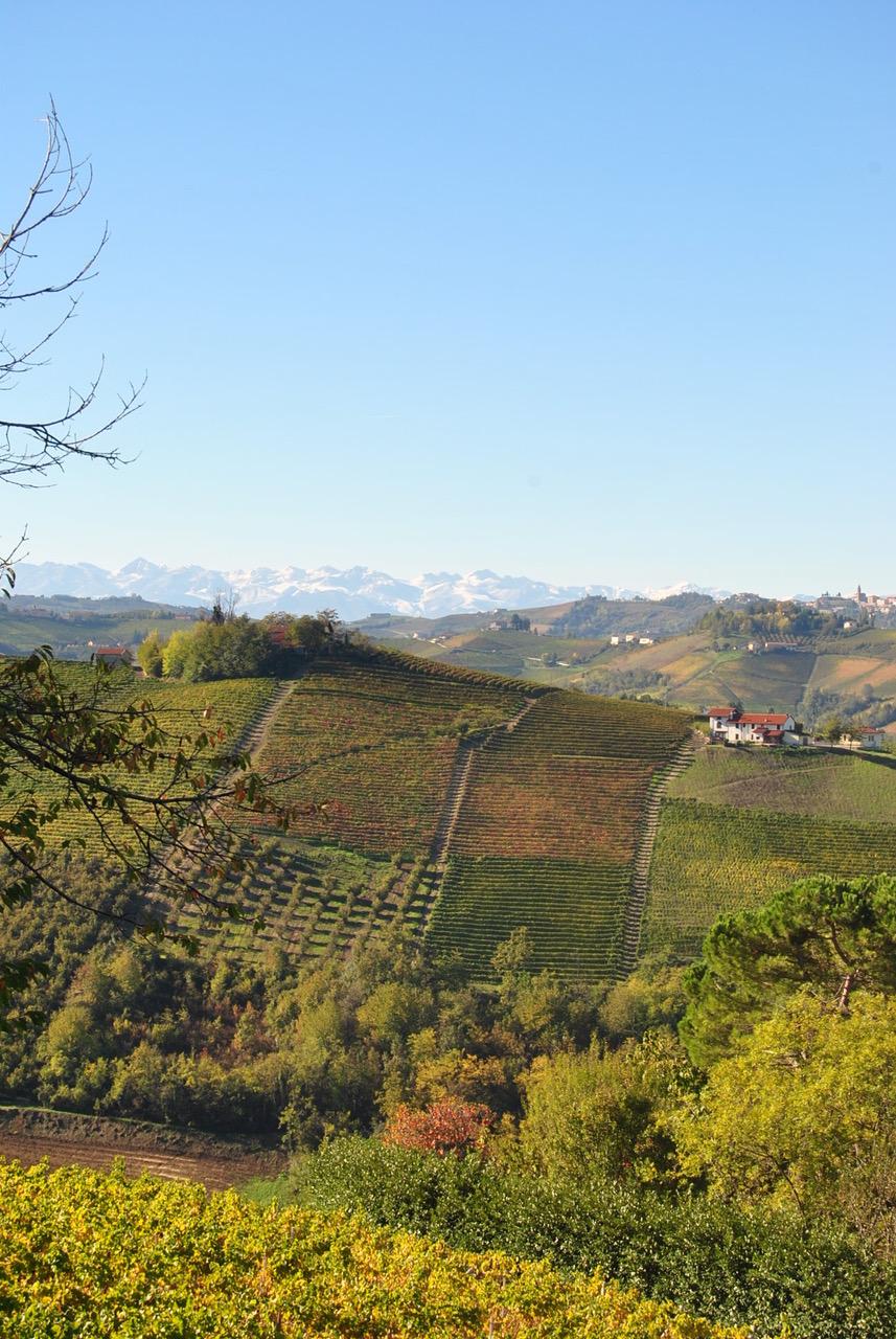 Best Italian wines regional excellence