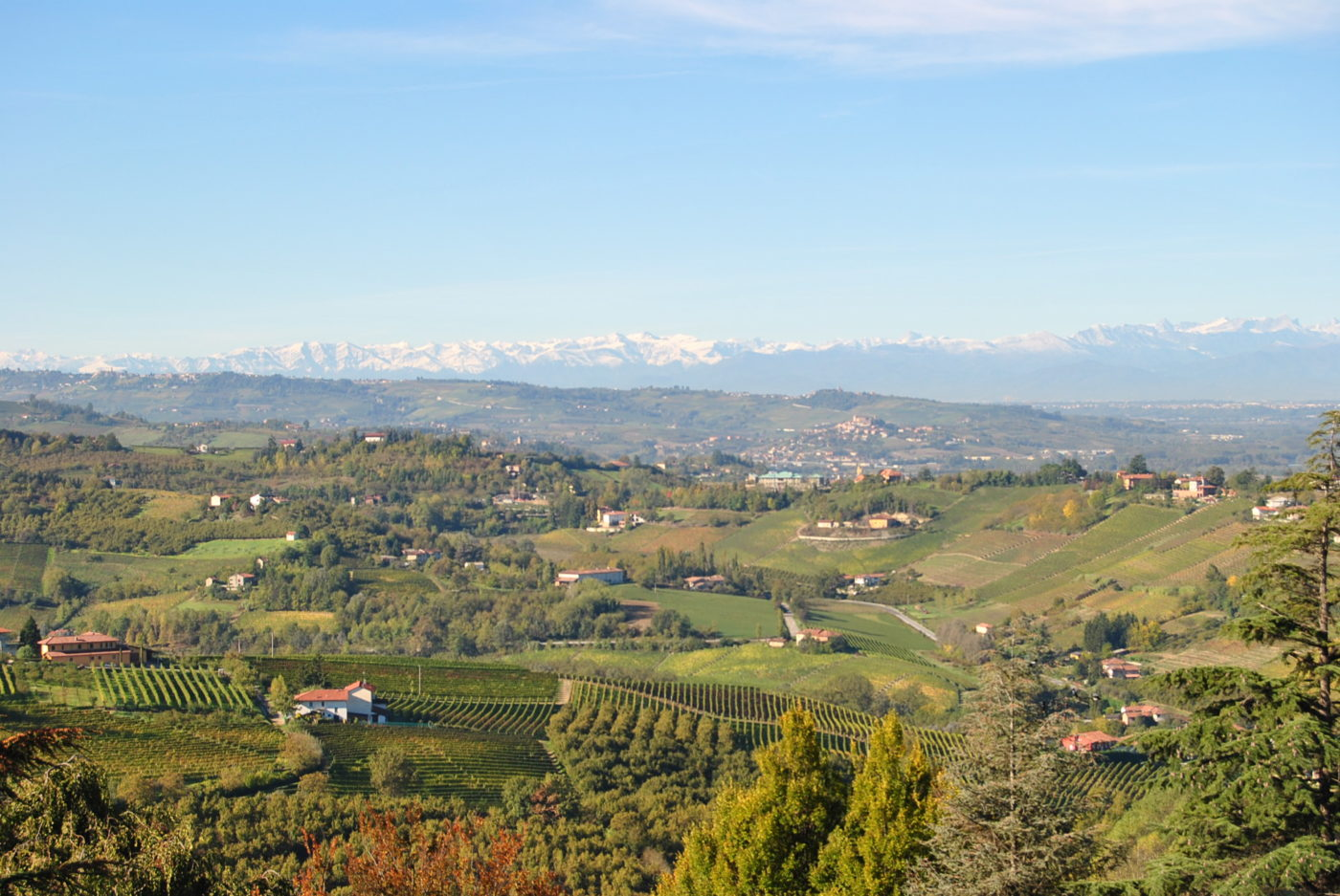 Wine for porcini mushrooms: territory