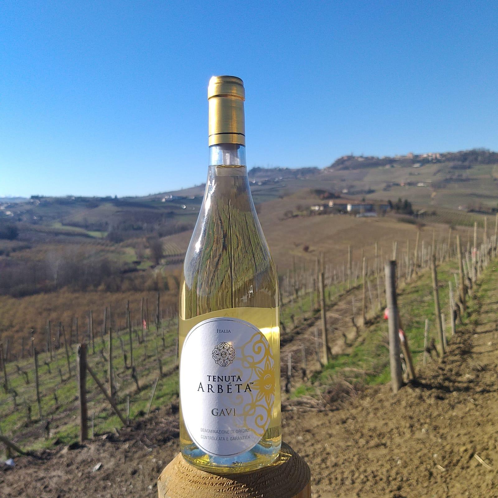 White wines of Piedmont: Gavi DOCG