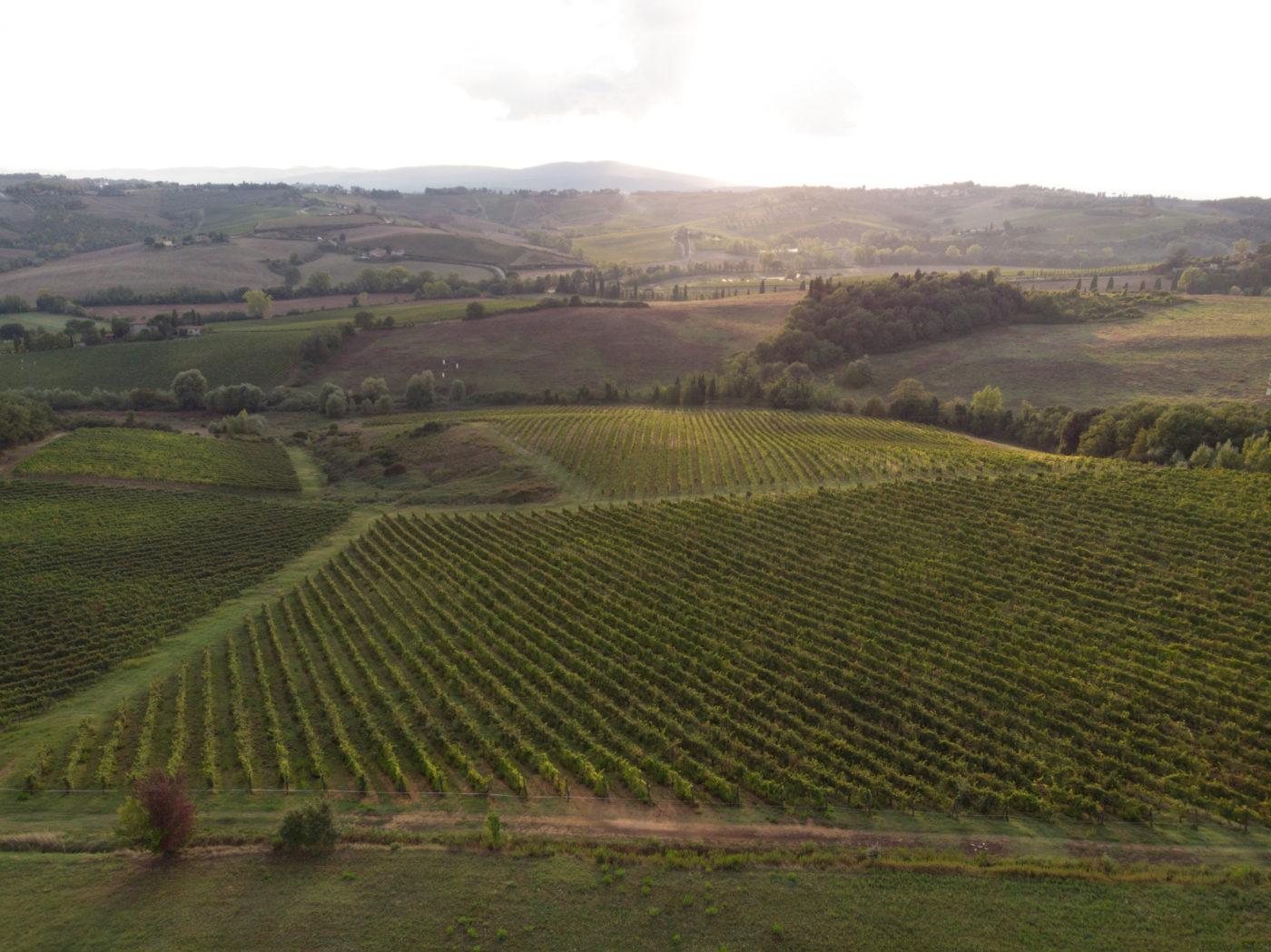 Winemaker Leonardo Da Vinci
