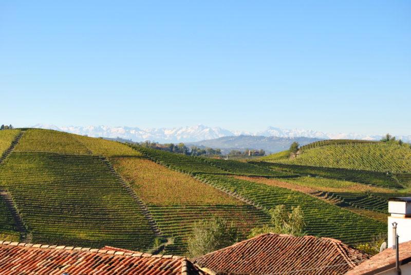 Gavi wine piedmont