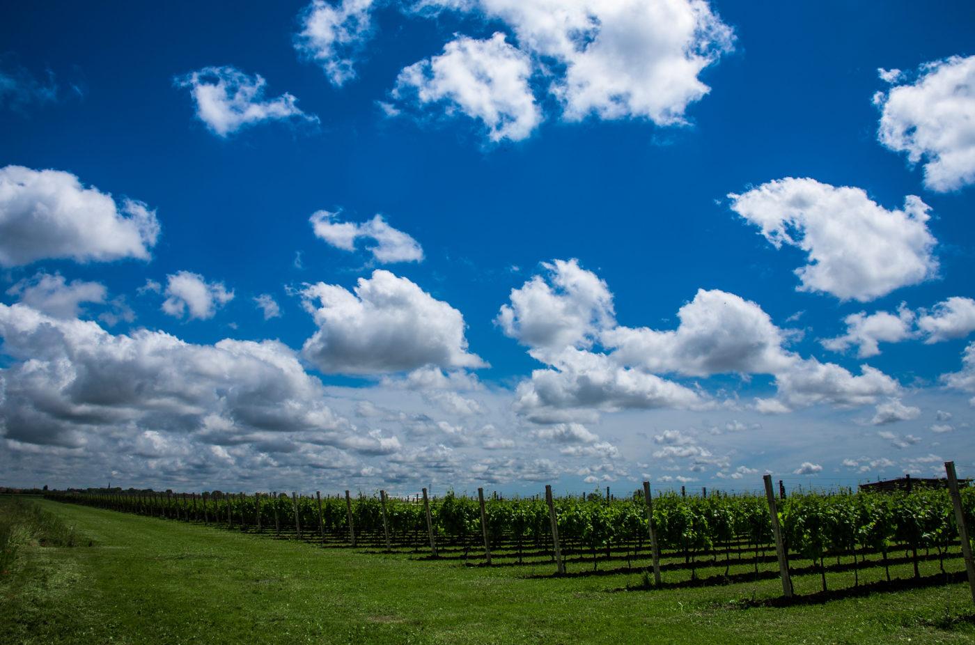 autochthonus vineyards